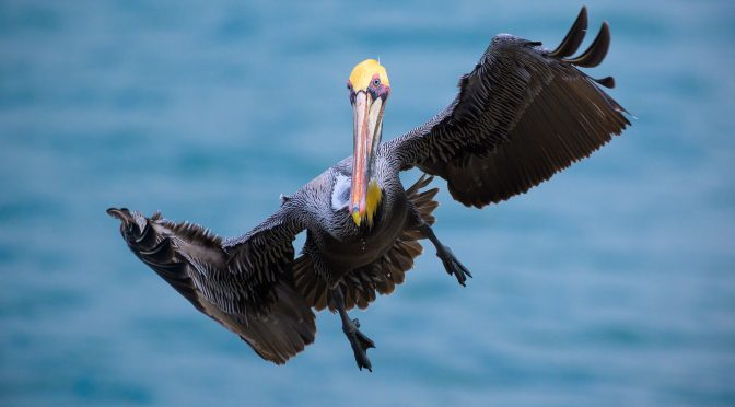 Bird Photography with Nikon Z mirrorless cameras