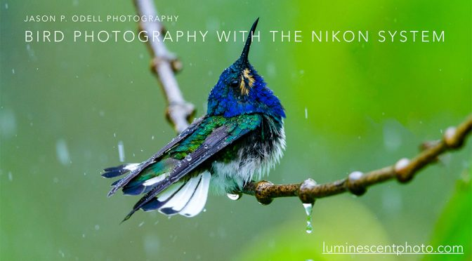 Video Workshop: Birding with the Nikon System