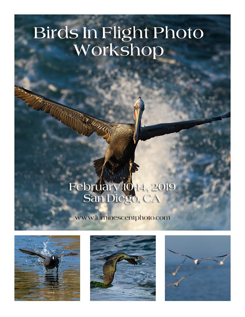 Birds in Flight Photo Workshop