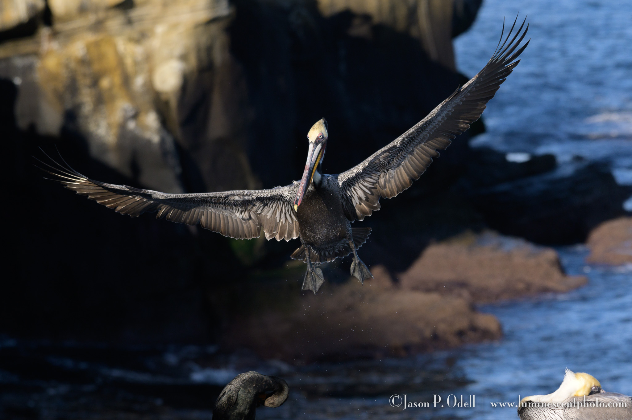 Discover the secrets to capturing great bird photos with Nikon digital cameras
