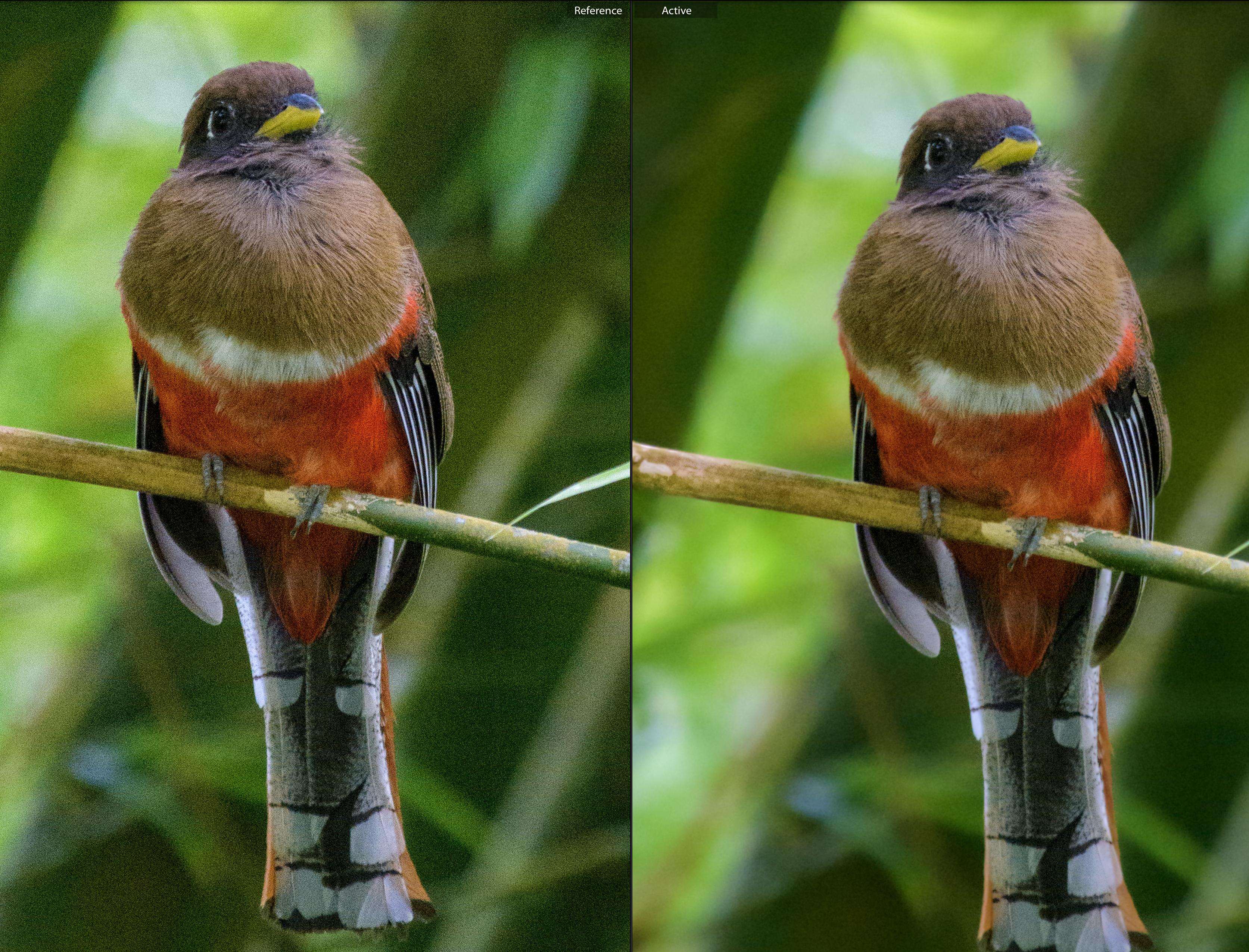 Comparison between default and custom sharpening and noise reduction settings in Lightroom Classic.